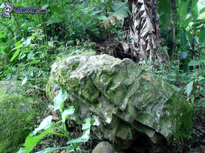Wald for Moos bilder pflanzen