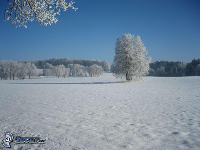 verschneite Bäume, verschneite Wiese