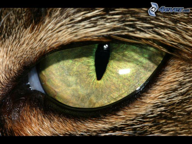 Auge Der Bestie