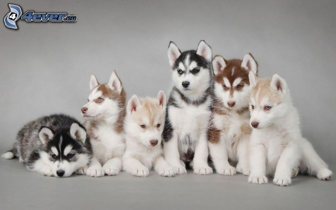 hunde verkaufen kostenlos