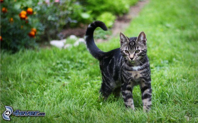 Warrior Cats Schwarzkralle
