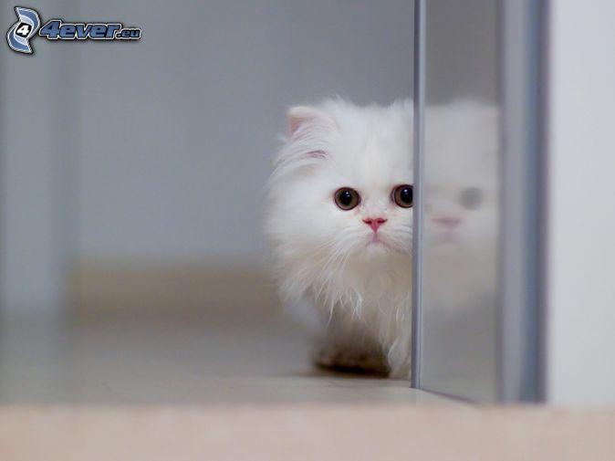 kleines weißes Kätzchen