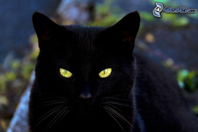 schwarze Katze, Katzenanblick