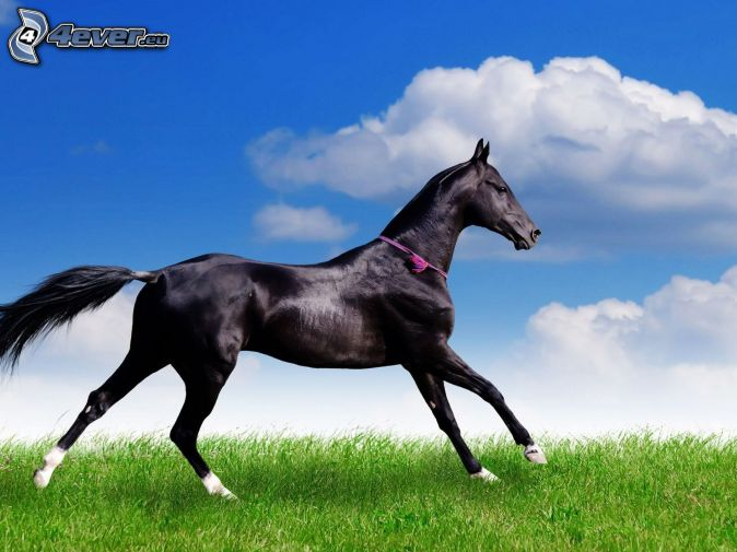 horse pics for desktop