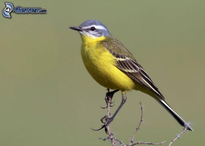 Gelbe Vogel