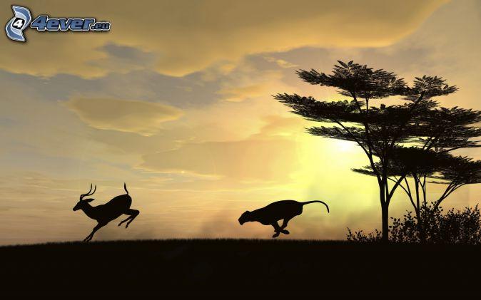 puma, Antelope, Silhouetten, Silhouette des Baumes
