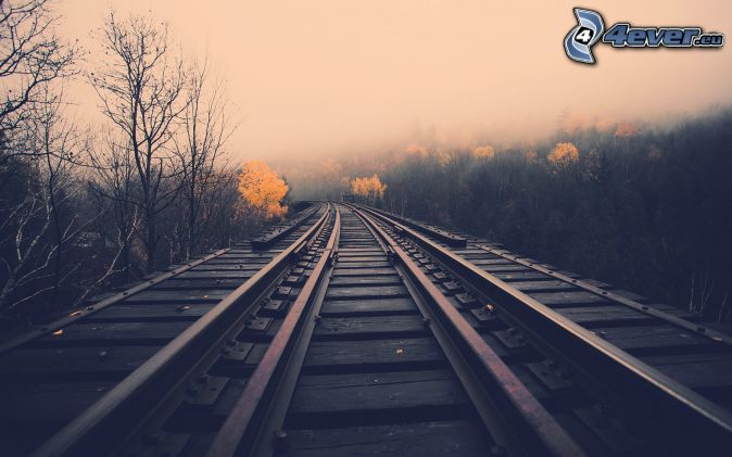 Schienen, Nebel, Wald