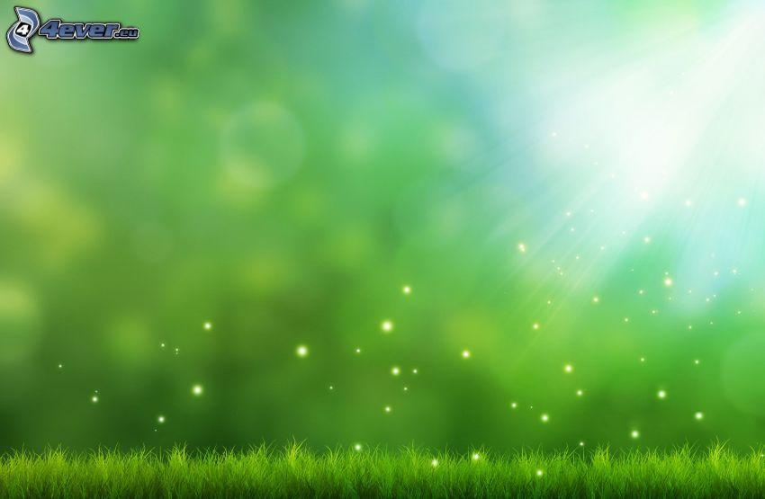 Gras, Sonnenstrahlen, grüner Hintergrund
