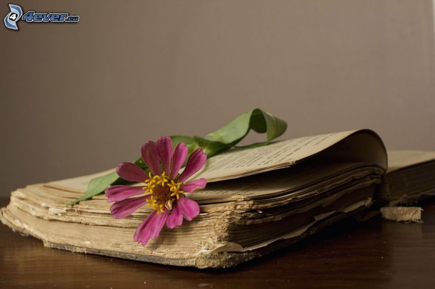 altes Buch, rosa Blume
