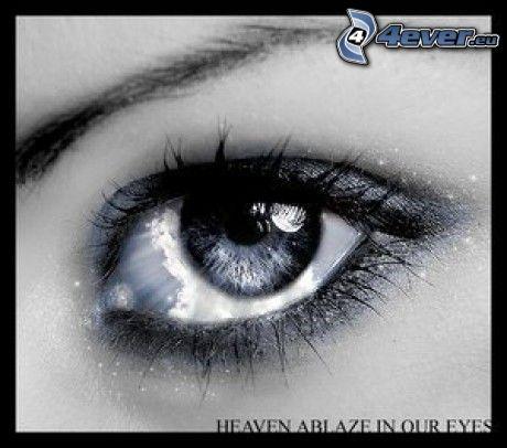 Auge, Wimpern, Augenbraue