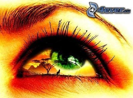 Auge, Wimpern, Spiegelung