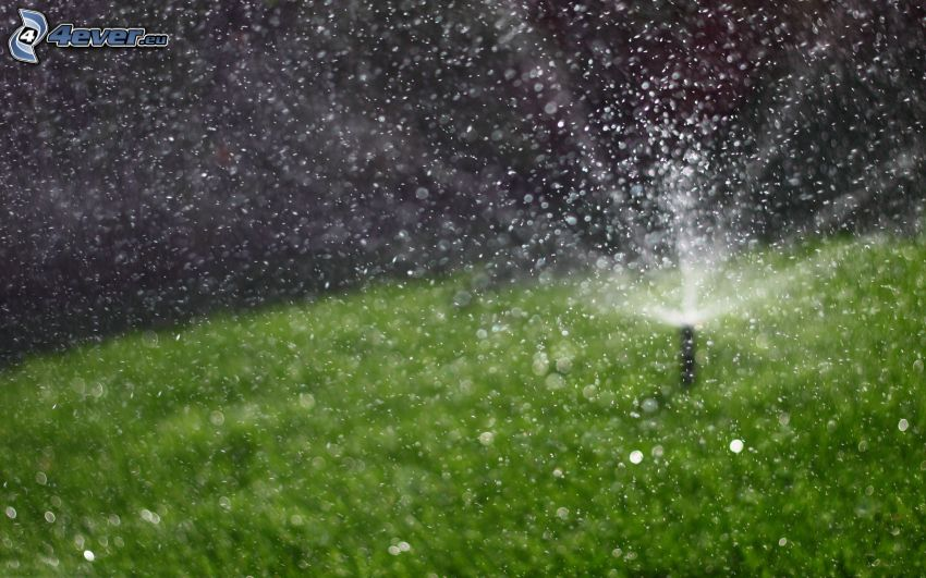Bewässerung, Rasen, Wassertropfen