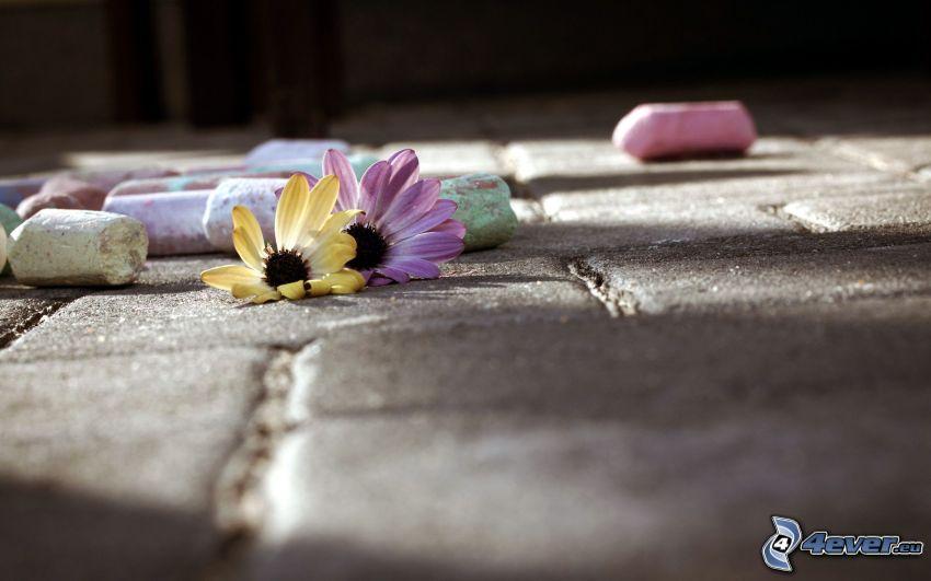 Blumen, Kreiden, Bürgersteig