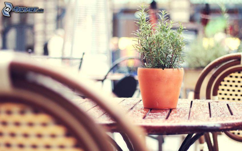 Blumentopf, Tisch, Stühle