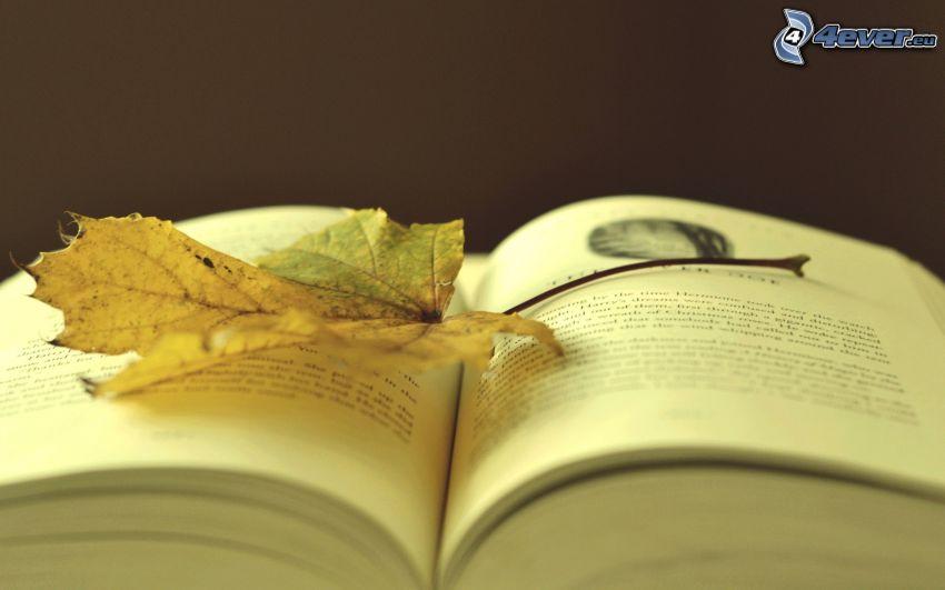 Buch, trockenes Blatt