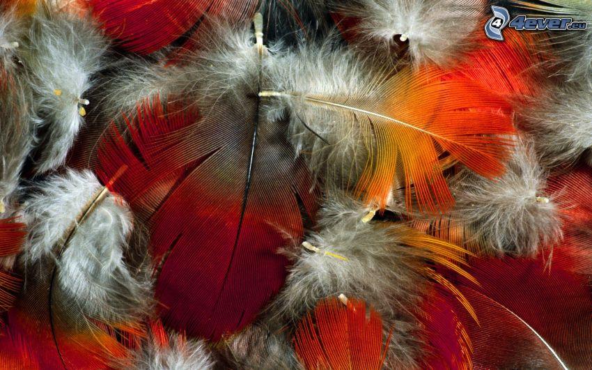 farbigen Federn