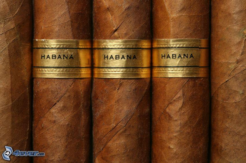 Habana, Zigarren