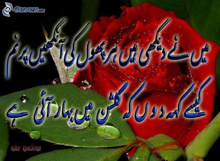 Schriftart, rote Rose, Blätter