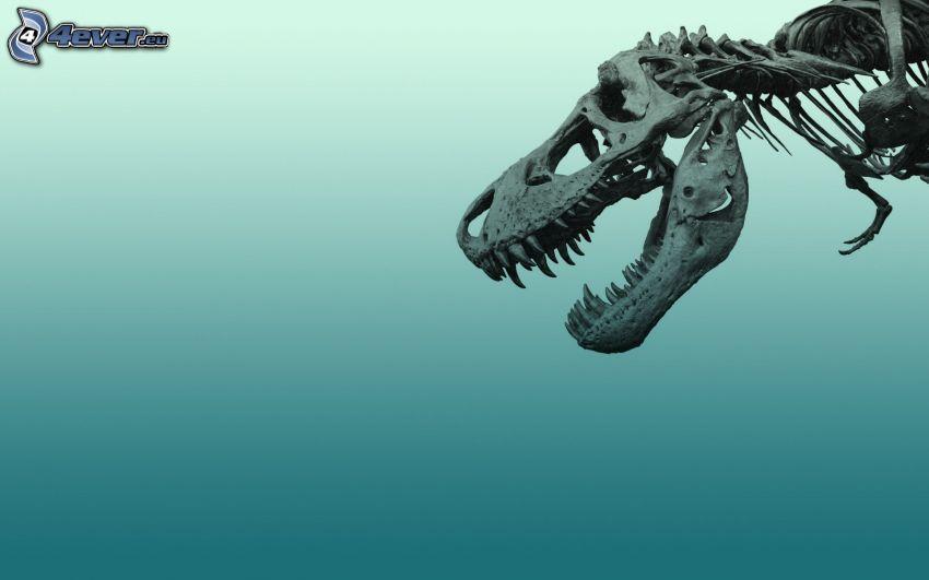 Skelett, Dinosaurier