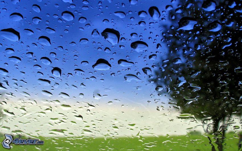 Wassertropfen, Glas, Silhouette des Baumes