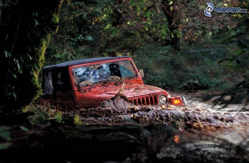 Jeep, Auto, Wald