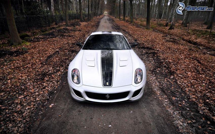 Ferrari 599 GTO, Waldweg, Laub