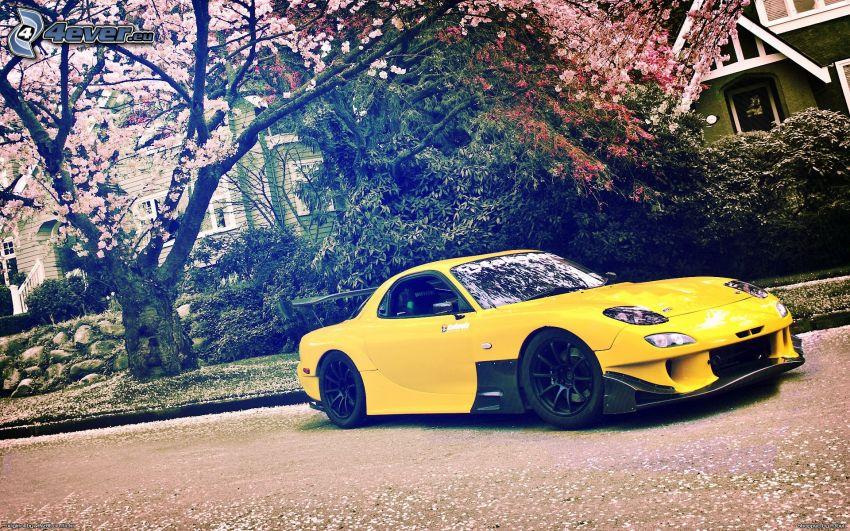 Mazda RX7, blühender Kirschbaum