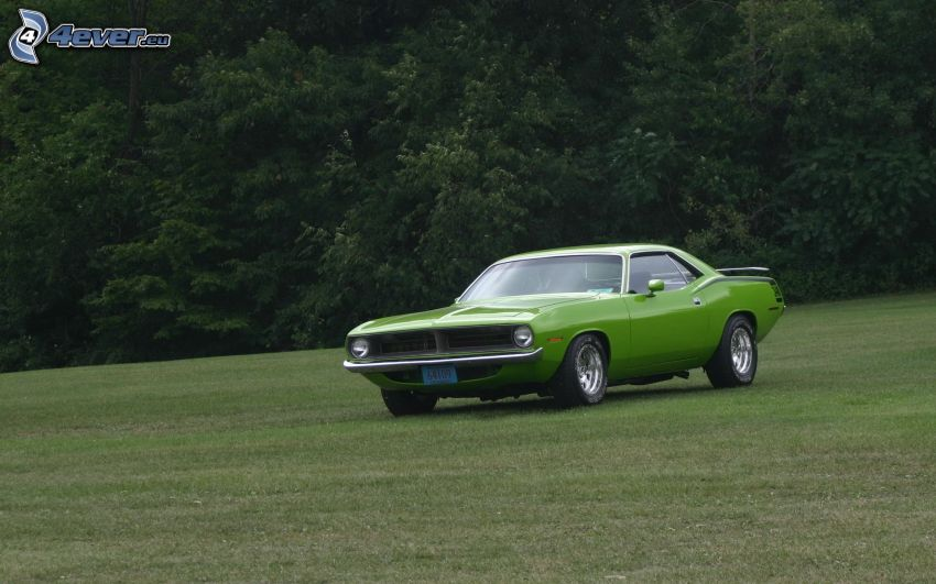 Muscle Car, Oldtimer, Wald