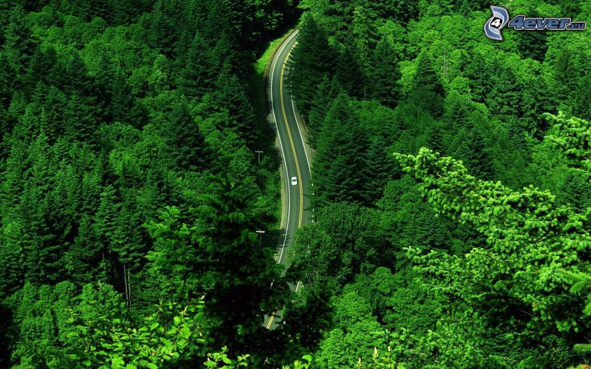 Pfad durch den Wald, Auto