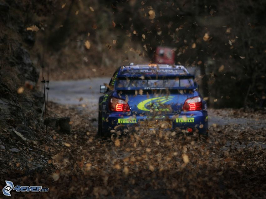 Subaru Impreza, Rennen, Rallye, trockene Blätter