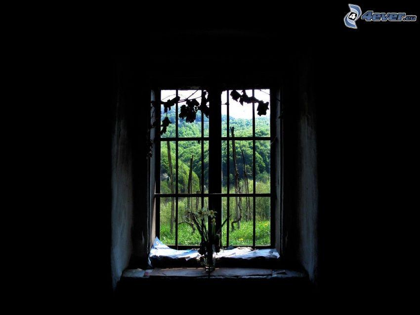 alte Fenster, Wald, Pflanzen