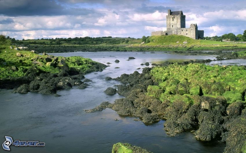 Dunguaire Castle, See, Moos