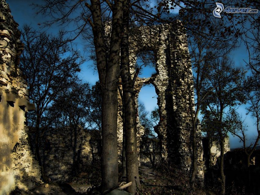 Ruine, Burg, Bäume