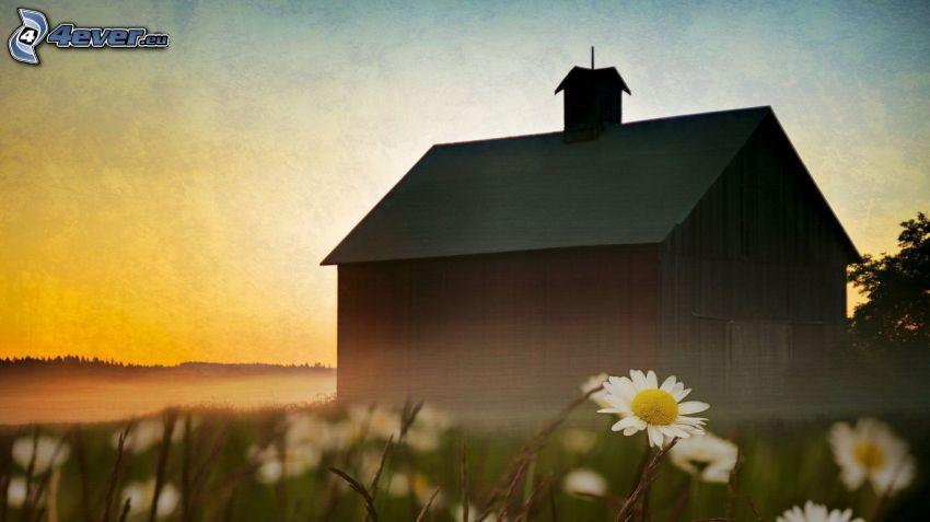 Holzhaus, Abend, Gänseblume
