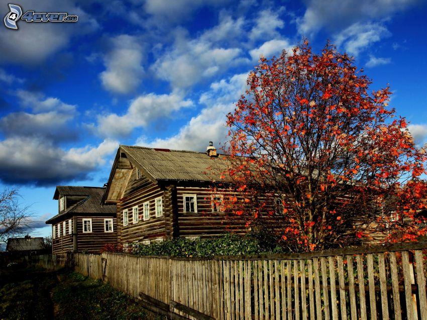 Hütten, Baum, rote Blätter