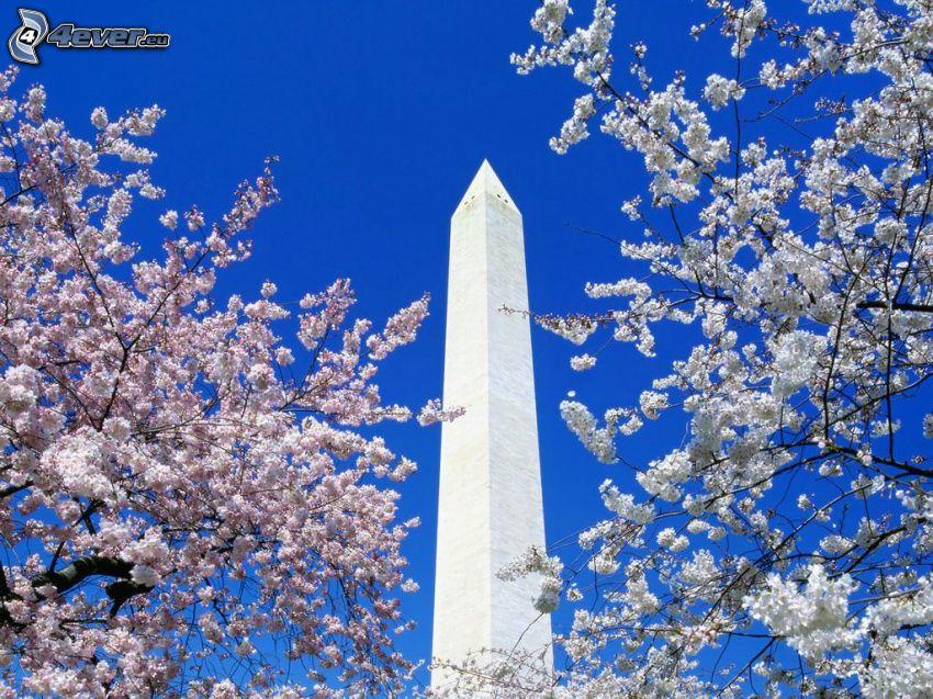 Obelisk, blühende Bäume, Himmel, Frühling