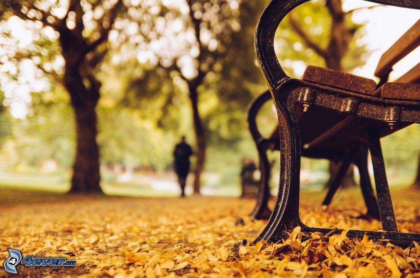 Bank im Park, herbstliche Blätter, Bäume