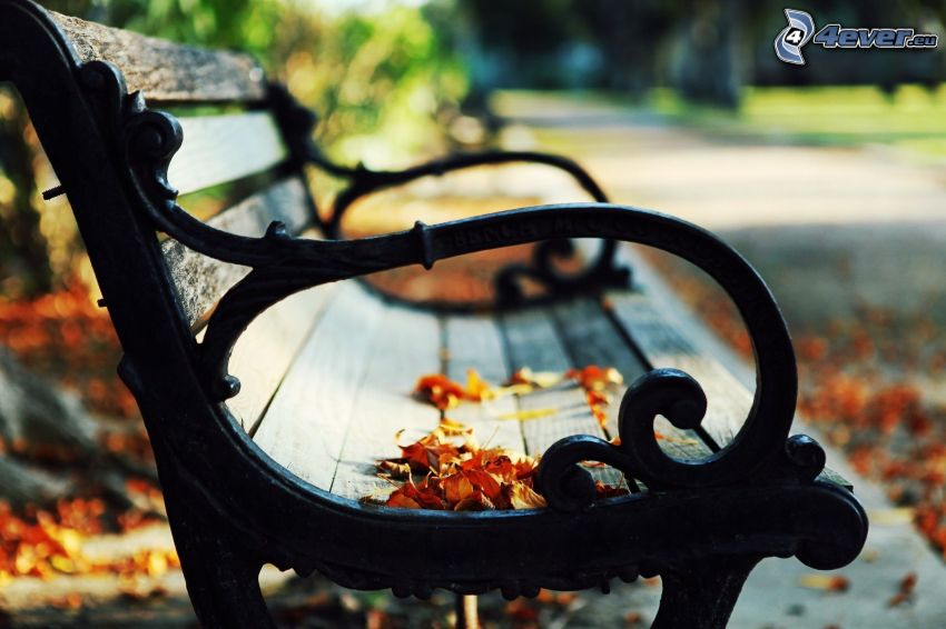Bank im Park, trockene Blätter