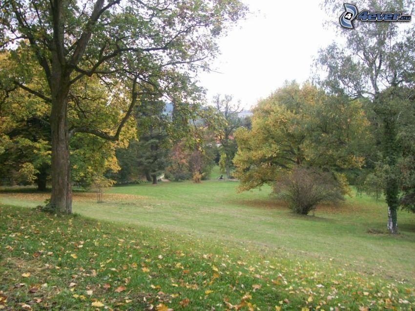 Bäume im Park, trockene Blätter, Rasen