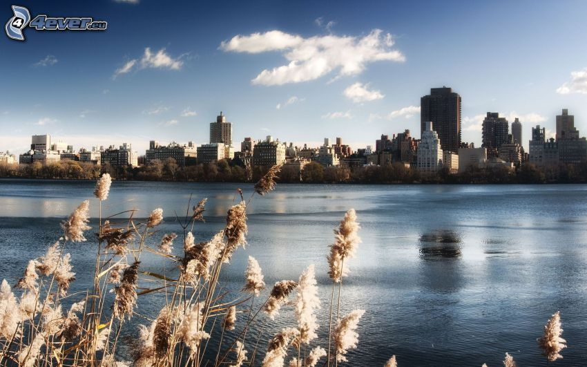 Central Park, See
