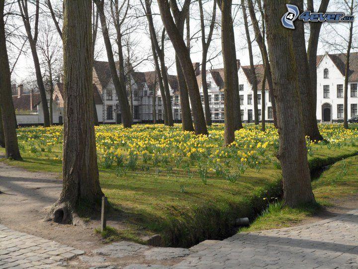 gelbe Blumen, Park, Belgien, Bäume, Kanal, reihe Häuser
