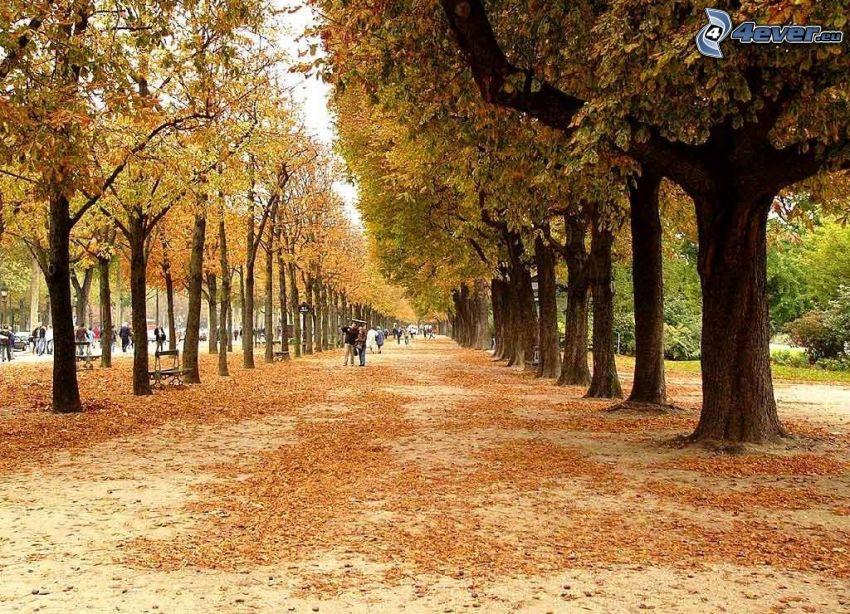 herbstlicher Park, Baumreihe, Straße, gelbe Blätter