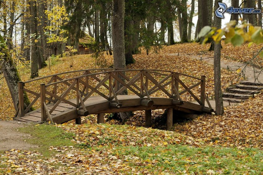 Holzbrücke, Wald, herbstliche Blätter