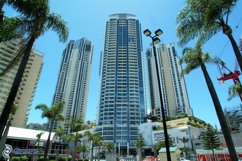 Gold Coast, Wolkenkratzer, Palmen