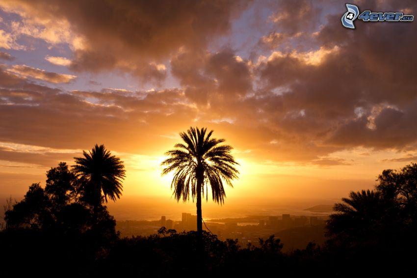 Sonnenuntergang über der Stadt, Palme, Wolken