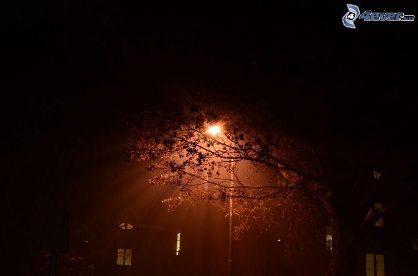 Straßenlaterne, Baum