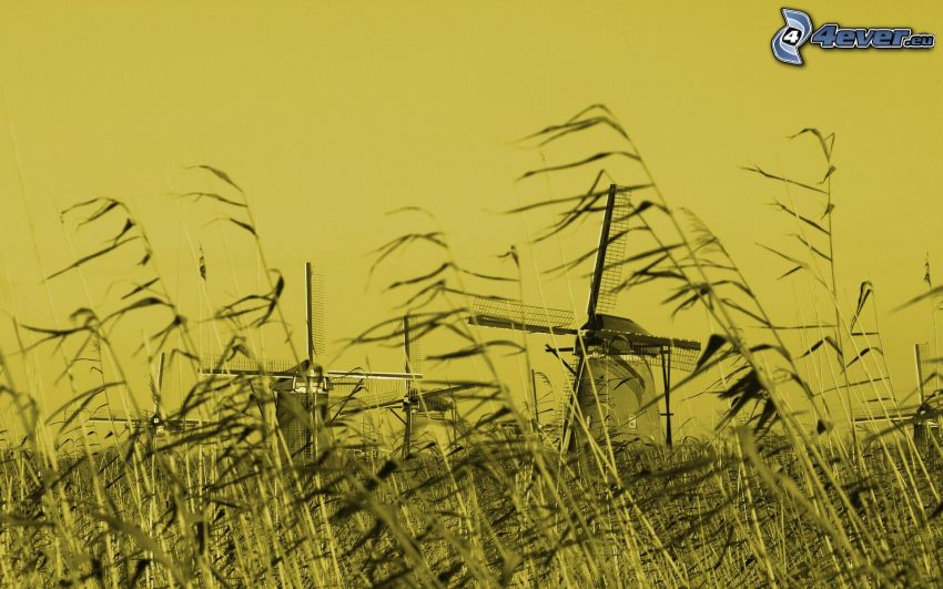 Windmühlen, Feld