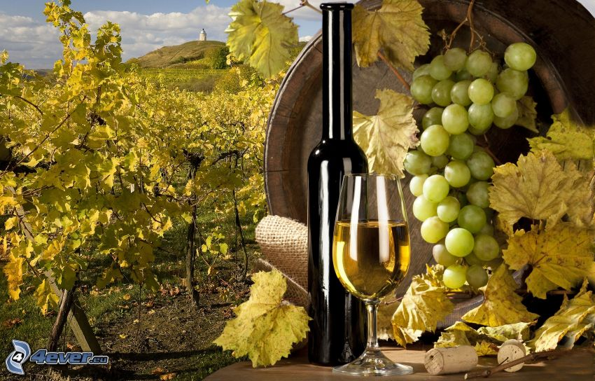Wein, Trauben, Weinberg