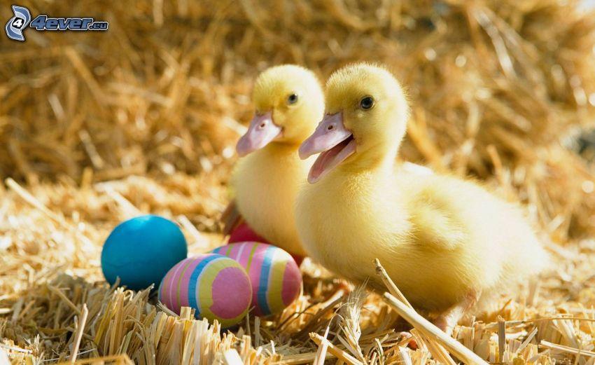 Entchen, Bemalte Eier