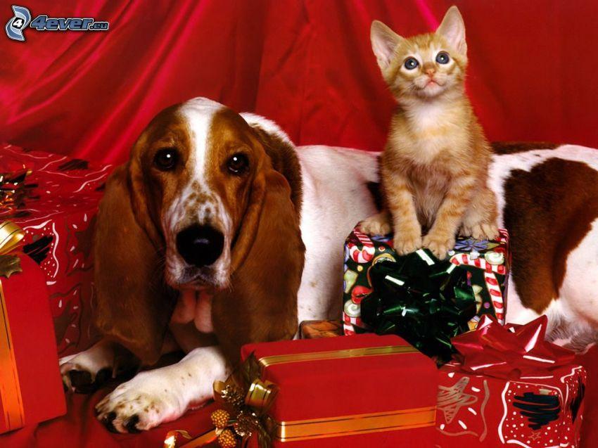 Weihnachten, basset, kleine rothaarige junge Katze, Geschenke
